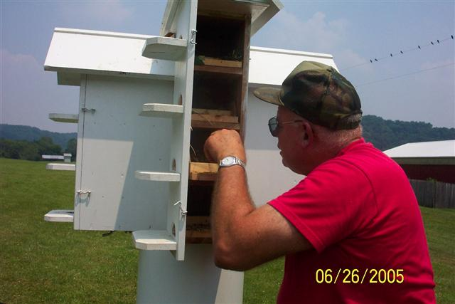 Inspecting the Purple Martin box